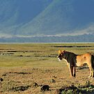 &quot;Queen of Ngorongoro&quot; by Andreas Koerner