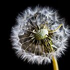 Blown Dandelion by Toastmuncher