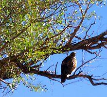 Hawks Eye View by marilyn diaz
