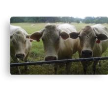 Mootown Presents! THE SUPREMES...(bovine version) Canvas Print