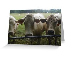 Mootown Presents! THE SUPREMES...(bovine version) Greeting Card
