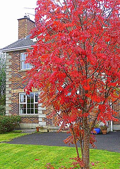 Autumn In Suburbia by Fara