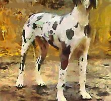 Harlequin Great Dane - Zeus by doggylips