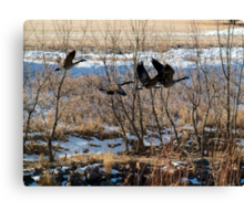 Canadian Geese Over Skunk Creek Canvas Print