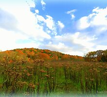 Ironweed Seedheads in Autumn Field by TrendleEllwood
