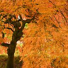 Westonbirt Autumn IV by Chris Tarling