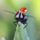 CHRISTMAS BLOWFLY by RonelBroderick