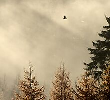 25.10.2012: Raven and Autumn Morning by Petri Volanen