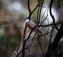 Birdsong by Ann Barnes