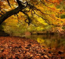 Nidd Gorge in Autumn by Paul Davis