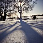 snow shadows by prawnie