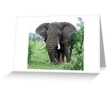 African Elephant grazing Greeting Card