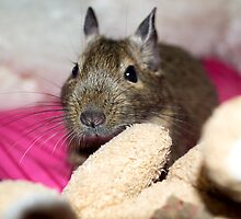 Adorable Degus by Lisa Marie Robinson