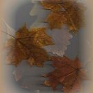 Autumn outside my window... by linmarie