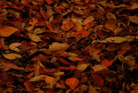 Carpet of Leaves  by Jeff Stroud
