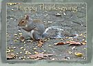 Thanksgiving Greeting Card - Gray Squirrel by MotherNature