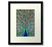 Peacock 1 of 3 Framed Print