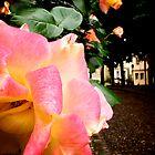 Rose by Wintermute69
