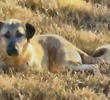 Anatolian Shepherd by doggylips