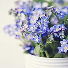 Forget me not by LittleBlueWren