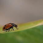 Ladybug #1 by Daniel Rankmore