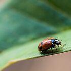Lady Bug #2 by Daniel Rankmore