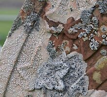Lichen on a gravestone by Morag Anderson
