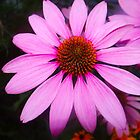 Cone Flower by FedericoArts