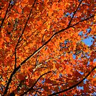 Autumn Leaves by FedericoArts
