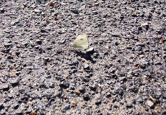Butterfly Two On The Road - 21 101 2 by Robert Phillips