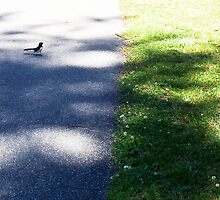 Wagtail On A Path One - 23 10 12 by Robert Phillips
