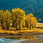 LAMAR VALLEY IN SEPTEMBER by Sandy Stewart