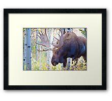 Sad Ending For A Stunning Bull Moose Framed Print