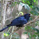Elusive Stormbird by byronbackyard