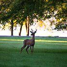 Meadow Buck by Richard Lee