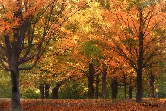 Nature's Red Carpet by KatMagic Photography