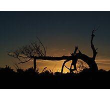 Nevergreen Tree Photographic Print