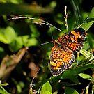 Butterfly by Robin Lee