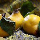 Quince Still Life by TerrillWelch