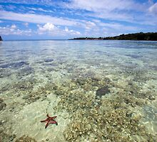 Starfish in ocean, Vanuatu, South Pacific Ocean by Sharpeyeimages