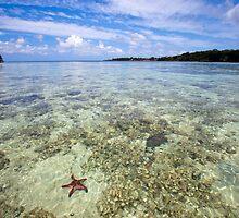 Starfish in ocean, Vanuatu, South Pacific Ocean by Sharpeyeimages