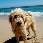 Salty Dog by Jack Cohen