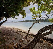 Seashore and trees, Vanuatu, South Pacific Ocean by Sharpeyeimages