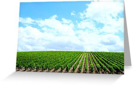 Vineyard by Jack Cohen