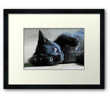 Fast Moving, Feisty Furball - Meet Haggis! Framed Print