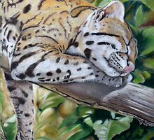 Sleeping Ocelot by Jill Tisbury