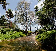 Stream flowing to seashore, Vanuatu, South Pacific Ocean by Sharpeyeimages