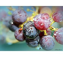 Grapes of Wrath Photographic Print