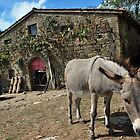 Happy Life in the Countryside by Alessandro Pinto