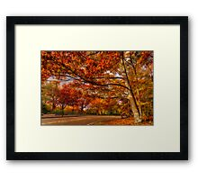 Fall Road,Chestnut Hill, Massachusetts Framed Print